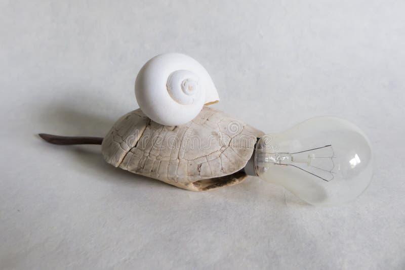 Сюрреалист черепаха стоковая фотография