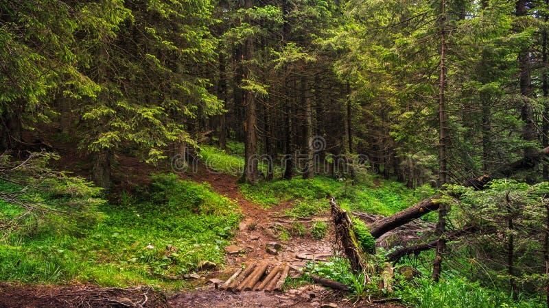 Славная сцена с лесом в прикарпатских горах, Украиной стоковое фото rf