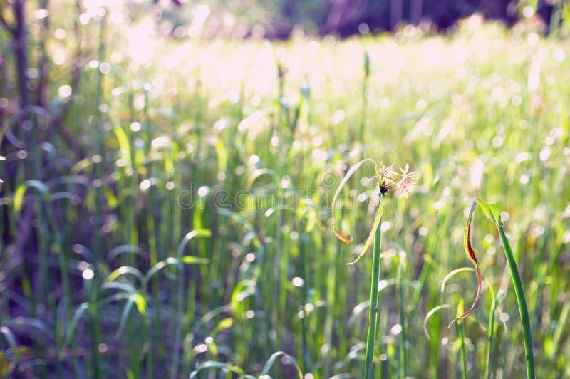 Славное зеленое поле стоковое изображение rf