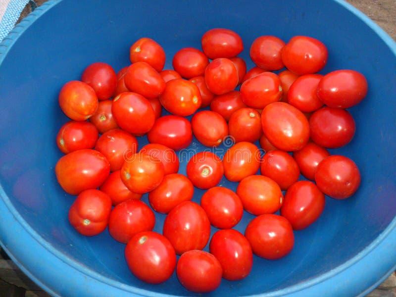 Славное распространение томата стоковое изображение rf