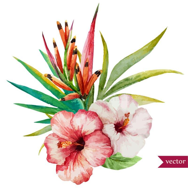 Славные тропические цветки иллюстрация штока