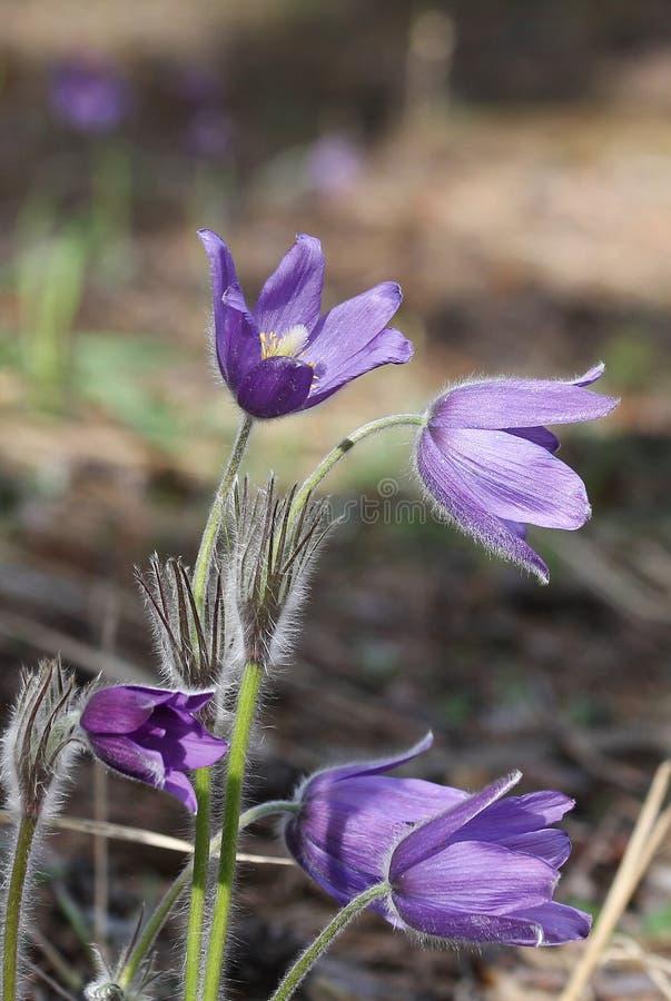 Славные фиолетовые цветки стоковая фотография rf