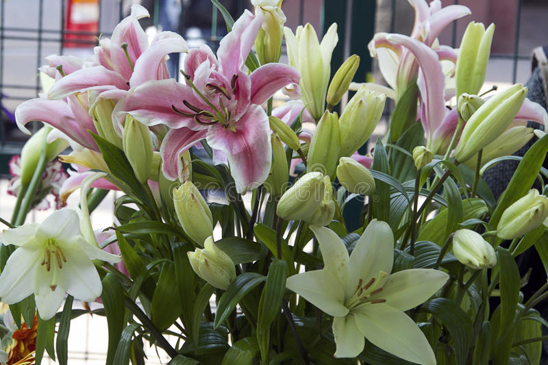 Славные lilys стоковое изображение rf
