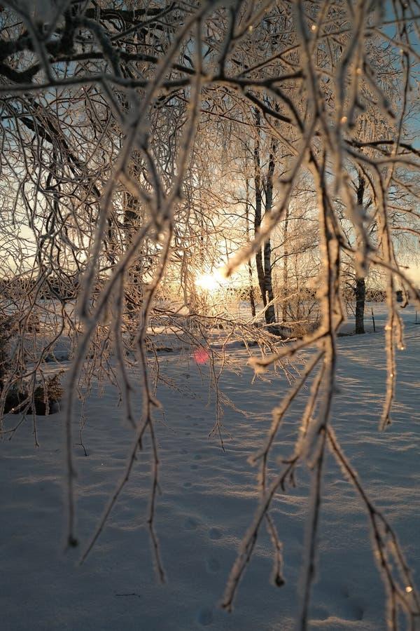 славный восход солнца в зиме стоковое изображение rf
