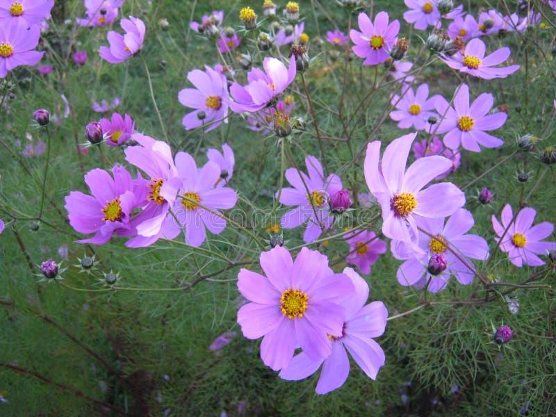 Славный цветок стоковая фотография