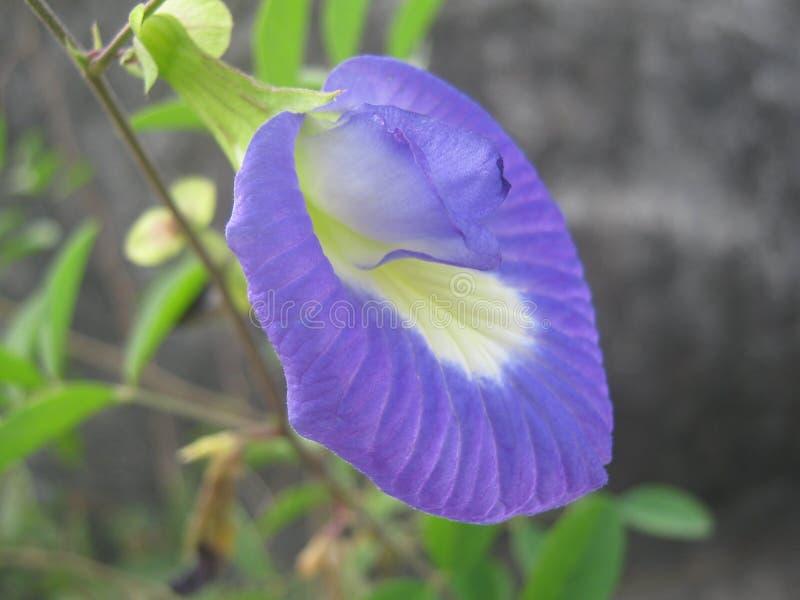 Славный цветок стоковое фото rf