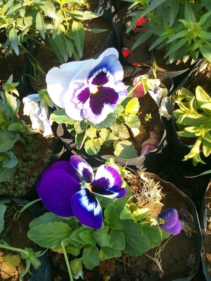 Славный цветок стоковые изображения rf