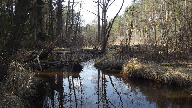 Славянское болото и лес стоковая фотография