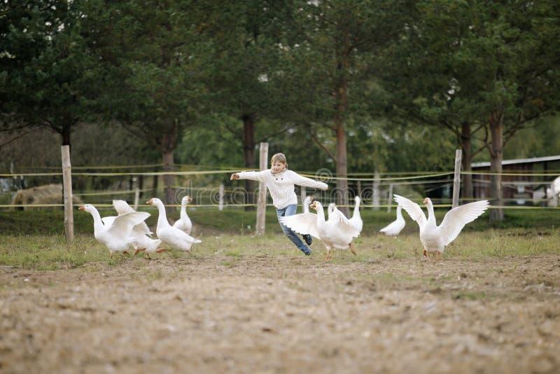 Сладостная счастливая маленькая девочка бежать после стада гусынь на ферме его оружия к стороне и усмехаться Портрет образа жизни стоковое фото