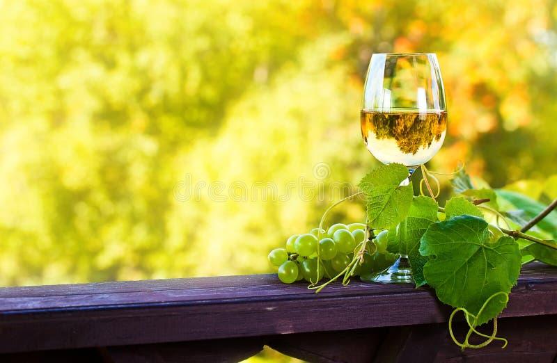Сладостное вино в винограднике стоковая фотография rf