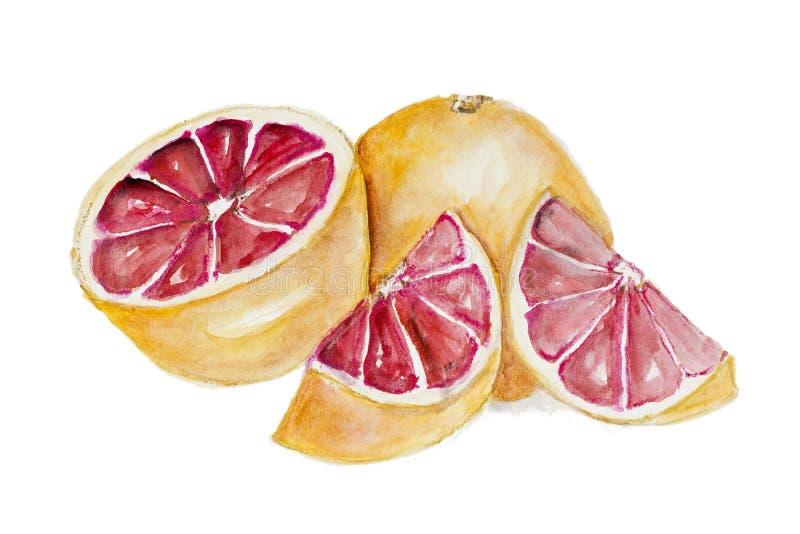 Сладостный красный грейпфрут иллюстрация вектора