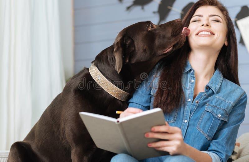 Сладостный Лабрадор давая его хозяйке поцелуй стоковое фото rf