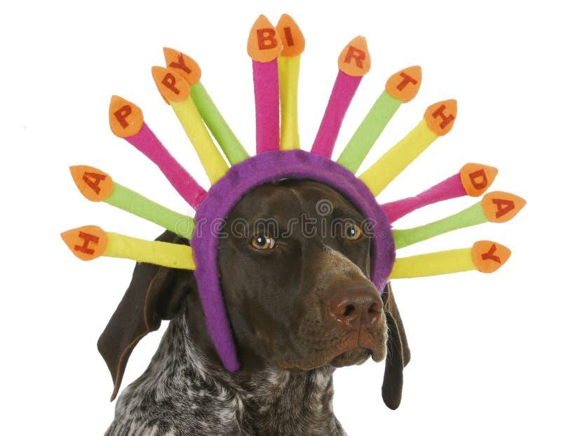 С днем рождения собака стоковое изображение rf