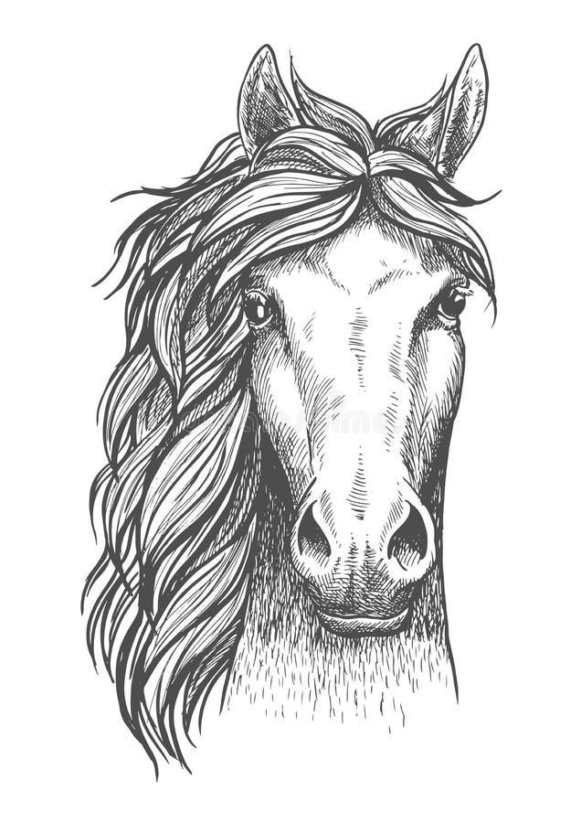 Сделанная эскиз к аравийская чистоплеменная лошадь с бдительными ушами иллюстрация вектора