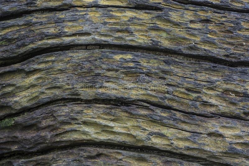 Сделанное по образцу поверхностное мертвых деревьев стоковая фотография