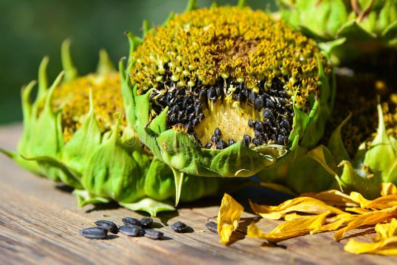09 20 сделали вопросами семян год солнцецвета