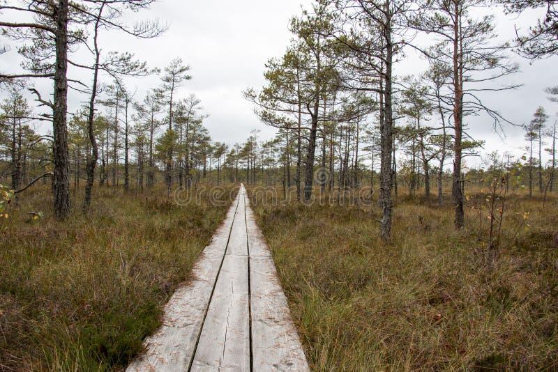 След болота с деревьями вокруг стоковые изображения rf