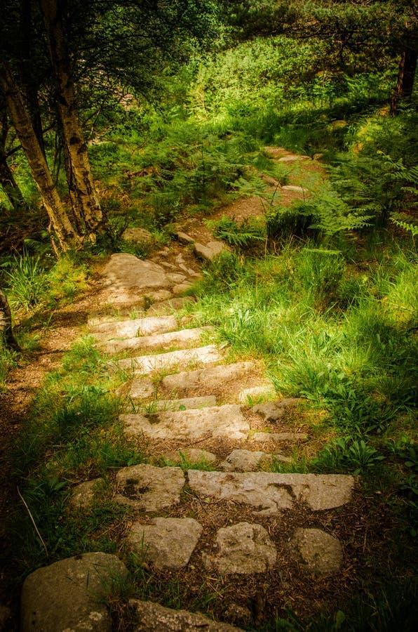 След лестницы в Muir заповедника Dinnet национального в Шотландии стоковая фотография rf