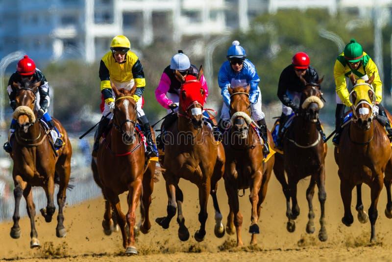 След жокеев лошадей гонки стоковое фото rf