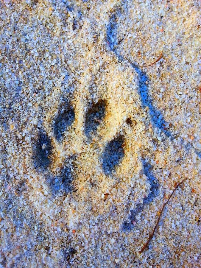 След ноги в песке стоковые фотографии rf