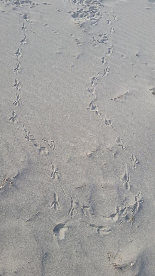 След ноги чайки стоковая фотография