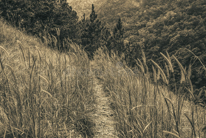 След среди леса стоковое фото rf