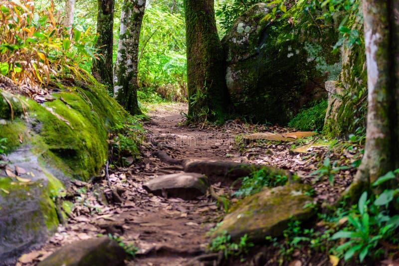 След туризма в древесинах в национальном парке Phu Hin Rong Kla, пэ-аш стоковое изображение