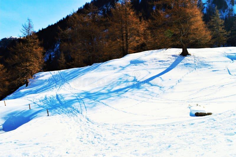Следы катания на лыжах в швейцарцах Альпах стоковое фото rf