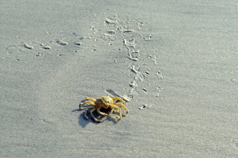 Следы краба на пляже Hilton Head стоковое фото rf