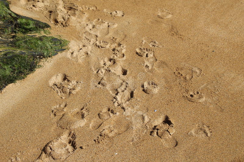 Следы ноги в песке стоковая фотография rf