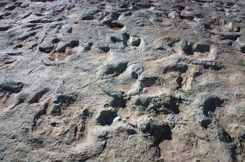 Следы ноги динозавра стоковые изображения rf