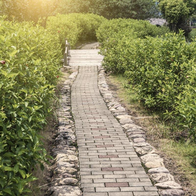 Следы парка и дерево кустарника стоковое изображение rf