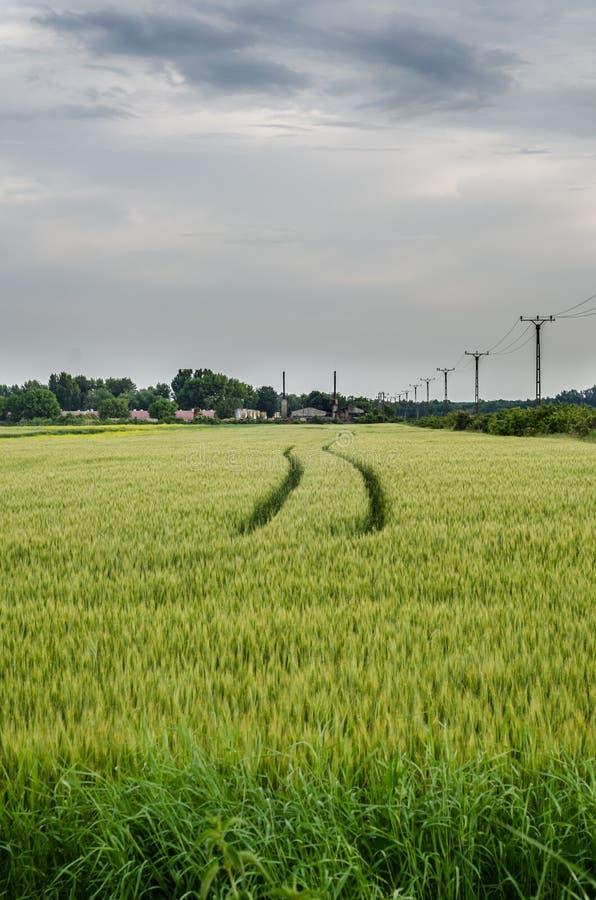 Следы через зеленое поле стоковая фотография