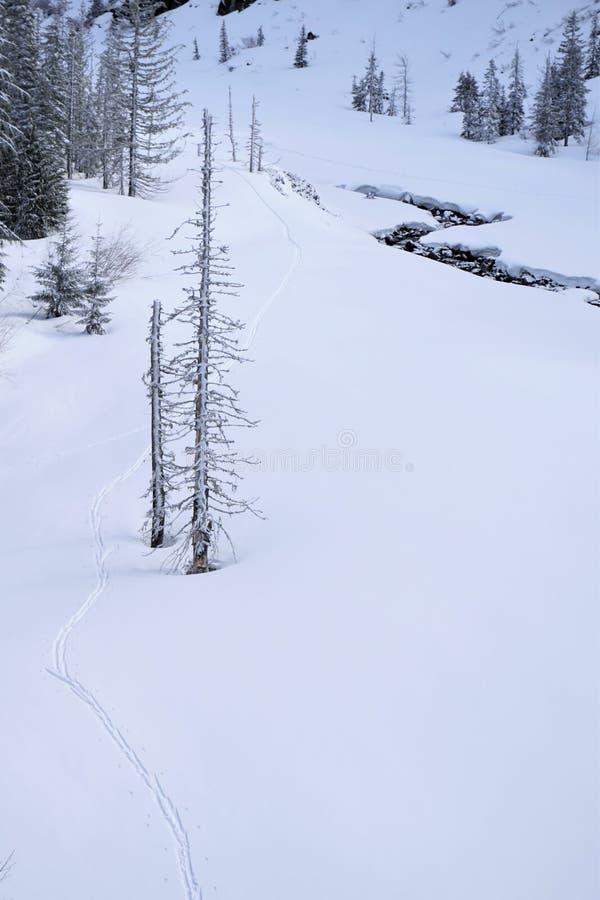 Следы лыжи за деревом стоковые изображения