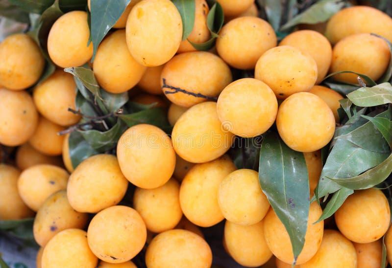 Слива Мэриан Mayongchid Maprang и манго сливы стоковые фотографии rf
