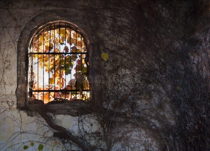 сдобренное окно стоковое фото rf