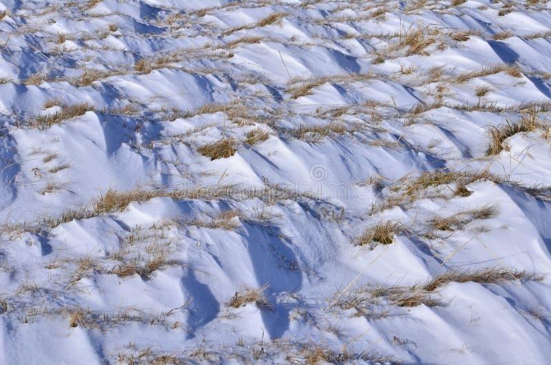 Сложенные снег и сухая трава стоковое изображение rf