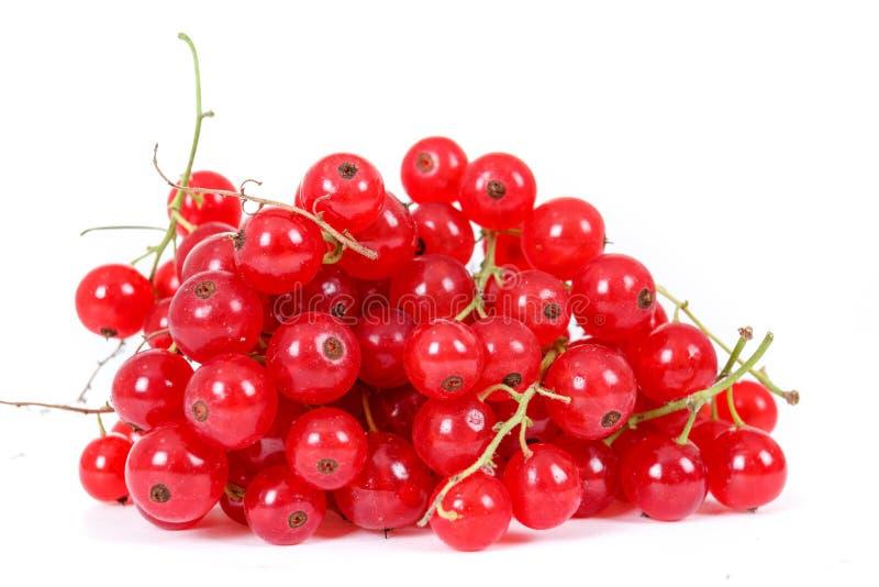 Download Сложите ягоды красной смородины на белой предпосылке Стоковое Фото - изображение насчитывающей closeup, хлебоуборка: 33736792