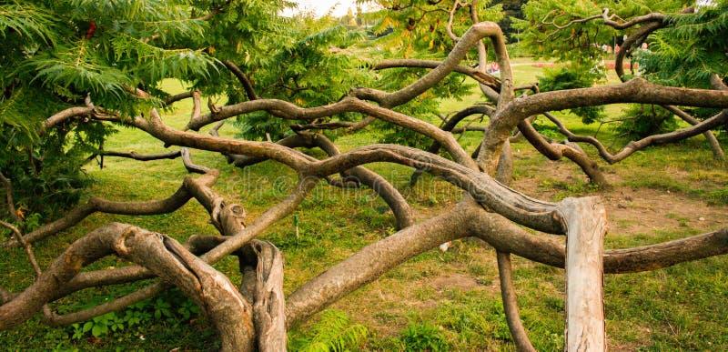 Сложные деревья стоковые фото