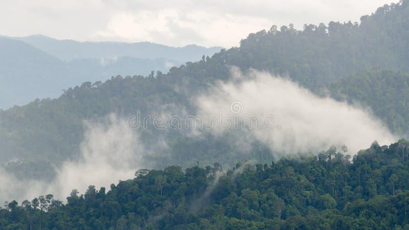 Слои высокой горы, туманные на дождевом лесе стоковые изображения