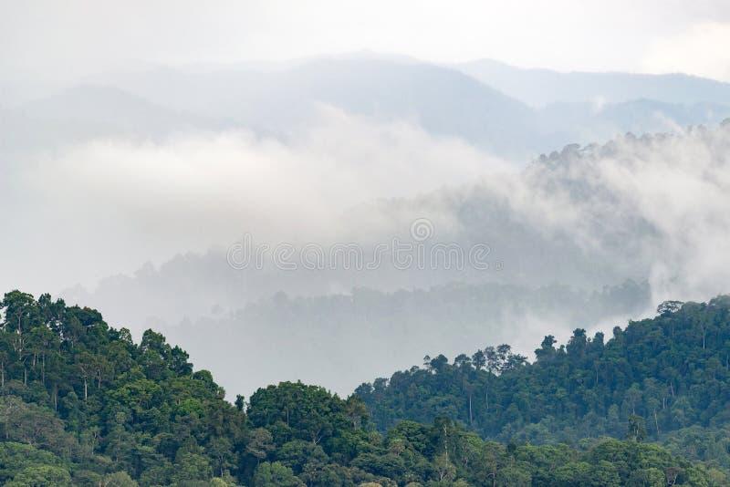 Слои высокой горы, туманные на дождевом лесе стоковая фотография