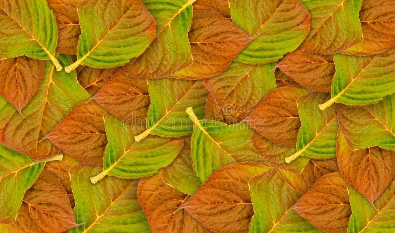 Слои листьев бука осени стоковые изображения
