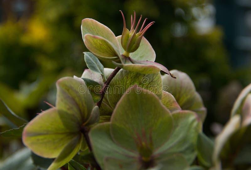 Сломанные цветки весны - стоковые изображения rf
