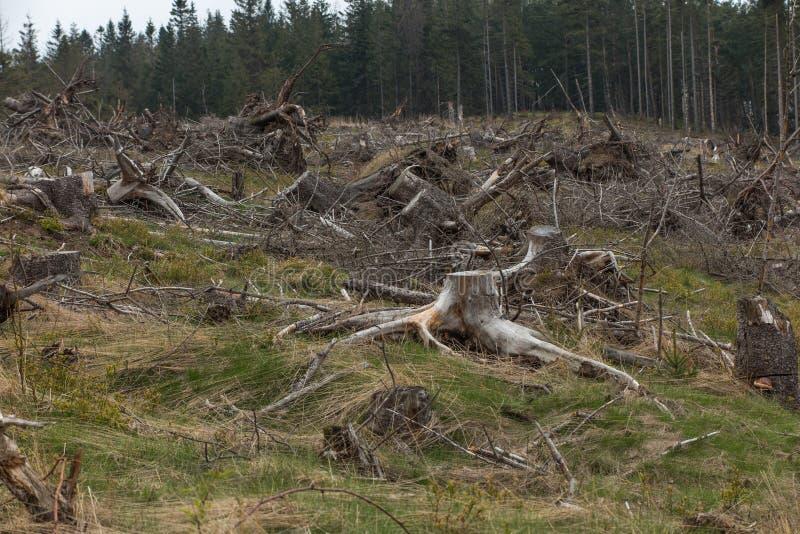 Сломленное дерево завяло вверху силезское Beskid в ar стоковые изображения rf