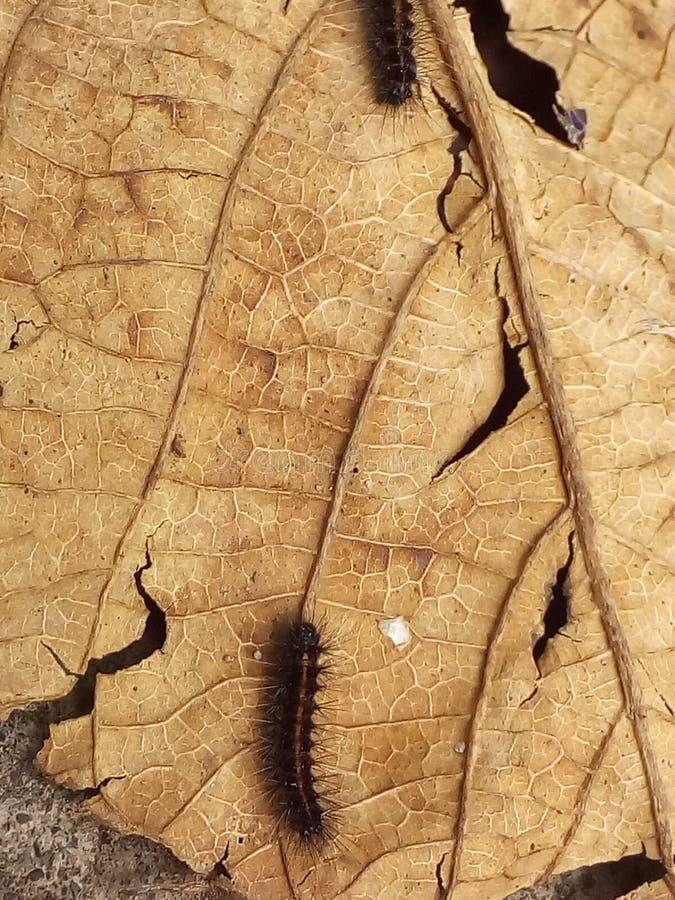 Сломленные лист стоковая фотография rf