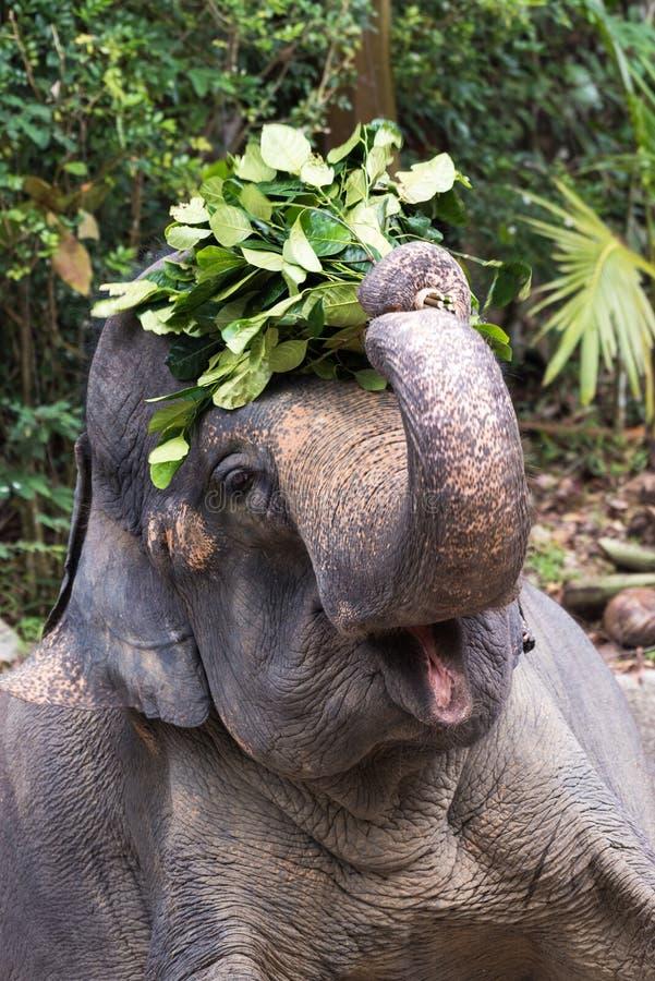 Слоны и люди стоковое фото rf