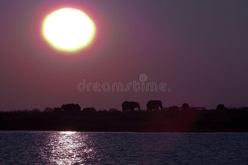 Слоны на заходе солнца 3 стоковая фотография rf