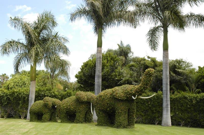 Слоны сада стоковая фотография