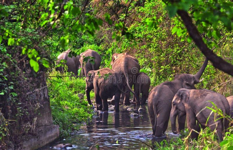 Слоны стоковые фотографии rf