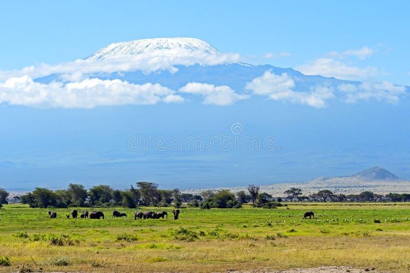Слоны Amboseli стоковое фото rf